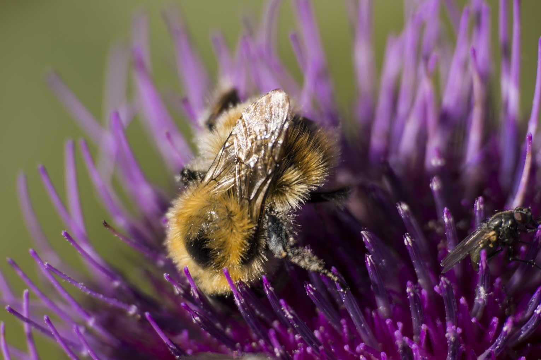 nahrungsmittel allergien durch pollen. Black Bedroom Furniture Sets. Home Design Ideas